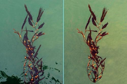 Seaweed_Edit